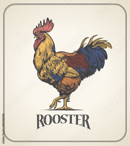 Photo Rooster