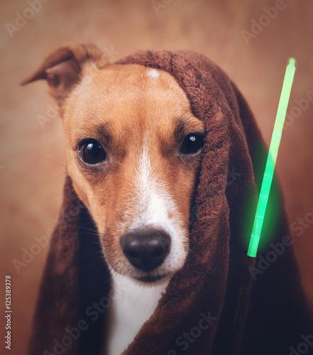 Pies Gwiezdnych Wojen Jack Russel. Niech moc