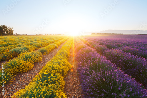 Door stickers Lavender Champ de lavande et d'immortelle