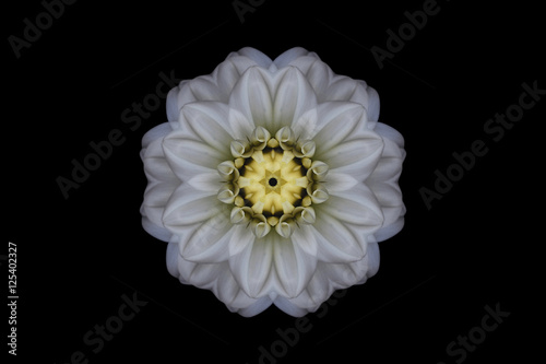 White and yellow symmetrical flower on black