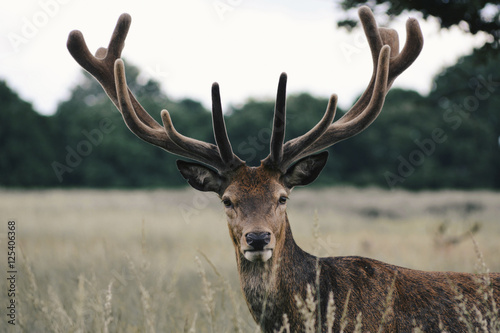 Portrait of stag in farm against sky during sunset