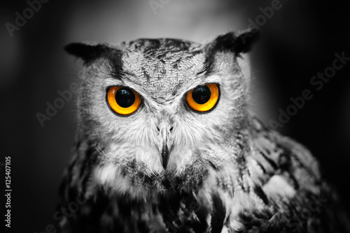 headshot-of-a-great-horned-owl