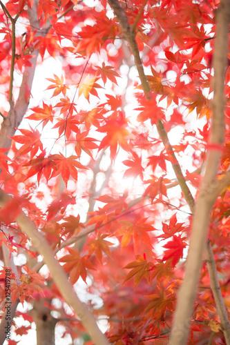 Fotobehang Koraal 秋の風景