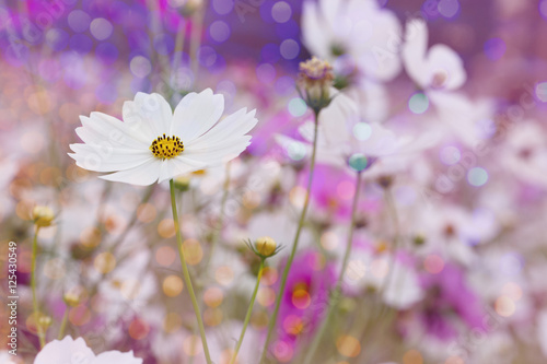 Foto op Plexiglas Snoeien Flower Background