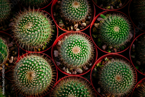Carta da parati  cactus in desert, cactus on rock, cactus Nature green background