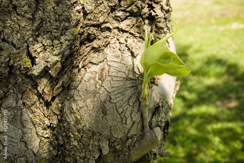 Spring tree branch bud