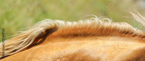Mane of the horse