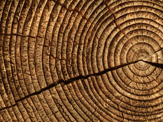 Fototapeta wood logs texture background of aged annual rings