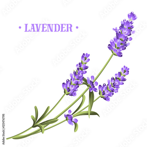Bunch of lavender flowers on a white background. Wall mural