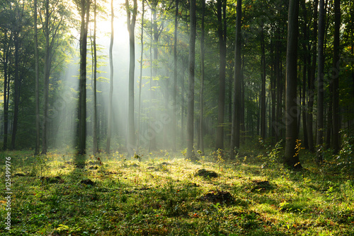 Fotobehang Natuur Morning in the forest