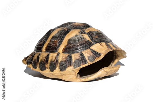 empty turtle shell isolated on white background,different lines
