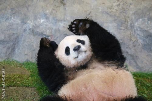Poster Panda パンダ