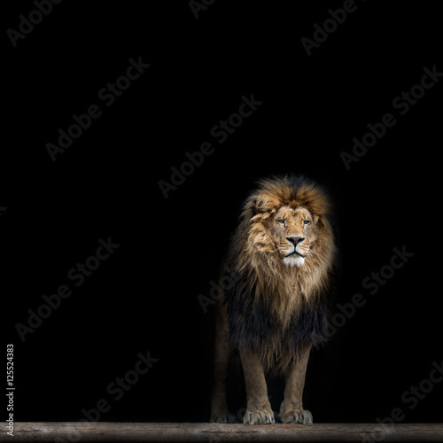 Keuken foto achterwand Leeuw Portrait of a Beautiful lion, in the dark