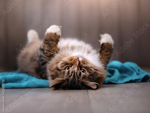 Deurstickers Franse bulldog tabby cat lying