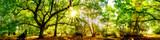 Fototapeta Las - Wald Panorama mit Sonne