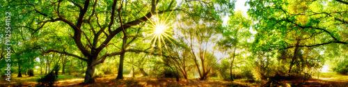 Spoed Foto op Canvas Pistache Wald Panorama mit Sonne