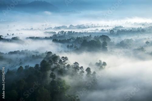 widok-z-lotu-ptaka-na-zamglony-las-o-poranku-w-indonezji