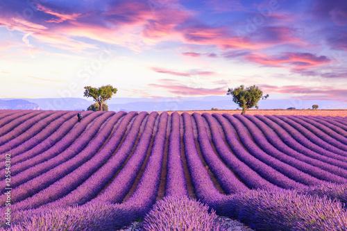 Obraz Lawendowy krajobraz - fototapety do salonu