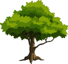 Green Tree For You Design