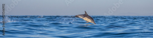 In de dag Dolfijn Dolphins jump out at high speed out of the water. South Africa. False Bay.