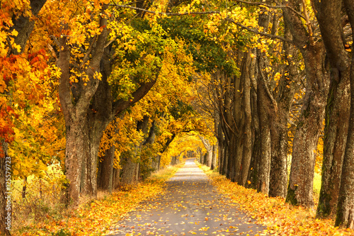 Poster Miel Autumn Road. /Kashubia, Poland