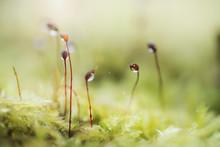 Growing Petals Of The Moss 4