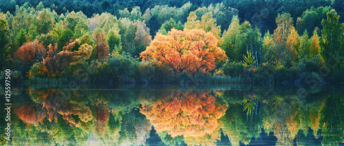 Fototapeta Autumn lanscape with trees reflection in water