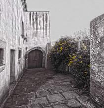 Foto Monocromatica Di Un Cortile Con Fiori Gialli
