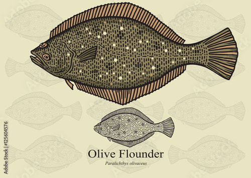 Obraz na plátne Olive Flounder
