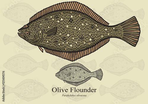 Fototapeta Olive Flounder
