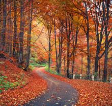 Colorful Autumn Scene In The M...