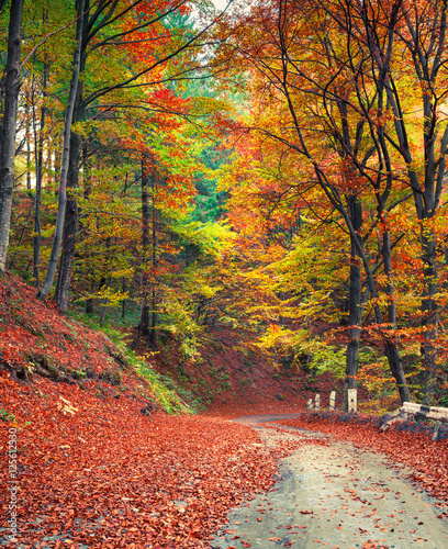 Tuinposter Baksteen Colorful autumn scene in the mountain forest