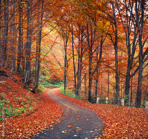 Foto op Aluminium Herfst Colorful autumn scene in the mountain forest
