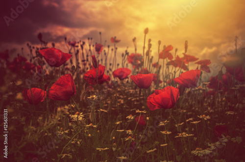 Foto op Canvas Poppy poppies field and sun
