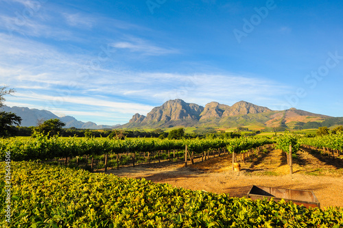 Photo sur Aluminium Vignoble Stellenbosch Vineyards