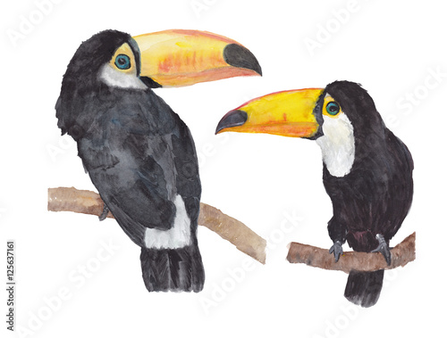 Foto op Canvas Toekan SEt of Toucans (Ramphastos toco) sitting on tree branch. Watercolor illustration.