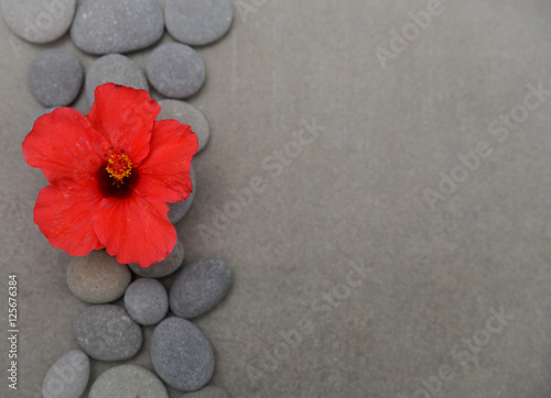 Tuinposter Spa Hibiscus theme objects on grey background