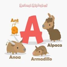 Cute Animal Zoo Alphabet. Letter A For Ant, Anoa, Armadillo And Alpaca.