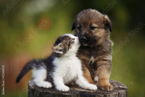 Fotografie, Obraz  cute puppy and kitten on the grass outdoor;