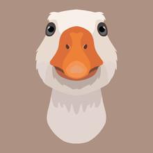 Vector Goose Face Farm Animal ...
