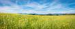 Allgäuer Bergwiese im Frühling, Bannner