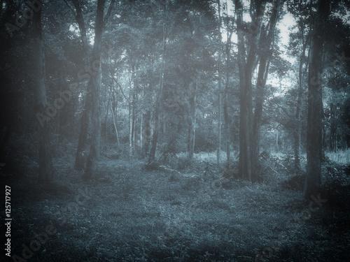 Fototapeten Wald dark foggy forest at dusk