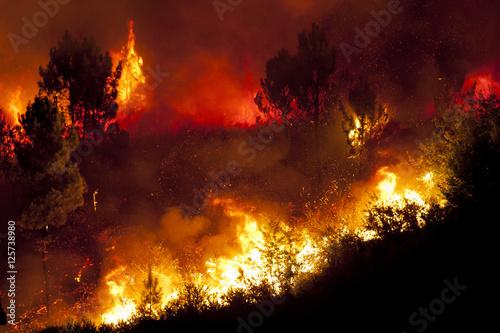 Fotografie, Obraz  Forest Fire