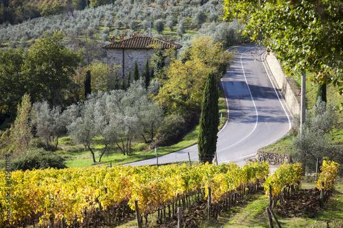 Foto  Italia,Toscana,Chianti, vigneti in autunno