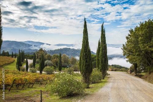 Deurstickers Toscane Italia,Toscana,Chianti, vigneti in autunno.