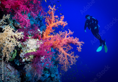 Plakat Kobieta nurek bada miękkie korale na Soraya Reef, Morze Czerwone, Egipt