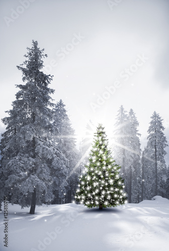 Photo  Christbaum in Verschneitem Wald
