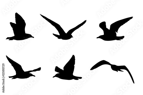 Cuadros en Lienzo  Möwen Silhouetten, Vektorgrafik, Silhouette von sechs Vögeln
