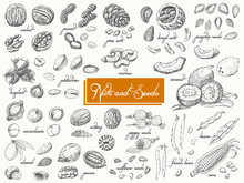 Big Collection Of Isolated Nuts And Seeds On White Background