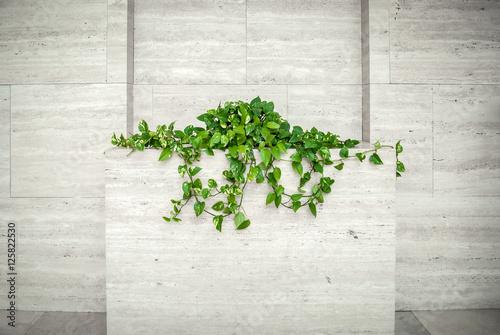 Fotografie, Obraz  Struttura bianca contemporanea con pianta verde